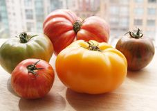 Tomato medley. A bunch of farm fresh tomatoes from the market Stock Photos