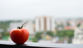 Tomato on a metal beam Stock Images