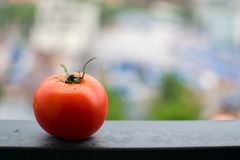 Tomato on a metal beam Royalty Free Stock Images