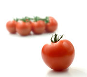 Tomato Montage. Studio image of juicy ripe single tomato with deliberately defocussed  tomatoes on the vine against a white background. Copy space Royalty Free Stock Photo