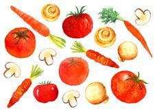 Tomato, Mushroom and Carrot Watercolor Illustration Icon. For any purpose such as menu book, food book, cover book, food poster, note book cover, purse print Vector Illustration