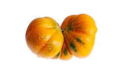 Tomato mutant. Custom type on a white Stock Photography
