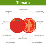 Tomato nutrient of facts and health benefits, info graphic Stock Image