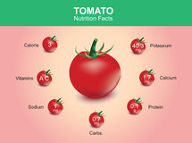 Tomato nutrition facts, tomato fruit with information, tomato vector Royalty Free Stock Image