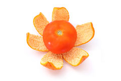 Tomato on Orange Peel Royalty Free Stock Images