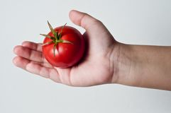 Tomato in Palm Royalty Free Stock Photography