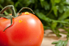 Tomato with parsely Stock Photography