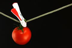Tomato Pegged. A tomato is pegged on to a line stock image