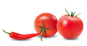 Tomato, pepper and chili. Stock Image