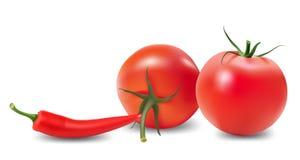 Tomato, pepper and chili. Stock Image