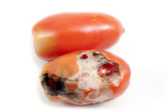 Tomato pest Stock Images
