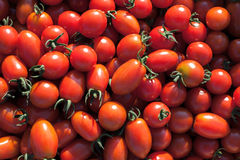 Tomato pile. Fresh tomato, big and red vegetables, background Royalty Free Stock Photo
