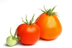 Tomato pile on white Royalty Free Stock Images
