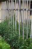 Tomato Plants Stock Image