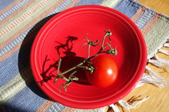 Tomato on a plate. Royalty Free Stock Photography