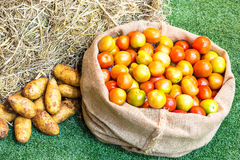 Tomato and potato in a sack. Fresh ripe organic vegetables on green grass Royalty Free Stock Photo