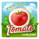 Tomato Promo Poster Stock Photos