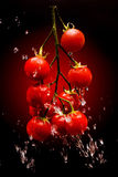 Tomato on red gradient background Stock Photography