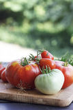 Tomato red and green Royalty Free Stock Photos