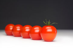 Tomato row Royalty Free Stock Image