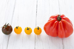 Tomato row. Oxheart tomato and colorful tomatoes in a row Stock Photos