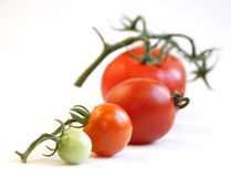 Tomato row Stock Photos