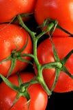 Tomato's Royalty Free Stock Photos