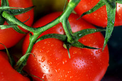 Tomato's. Fresh juicy red tomatoes with drops Royalty Free Stock Photography