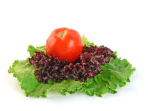 Tomato on salad. Red tomato on green and red salad leaves isolated on white background Royalty Free Stock Photography