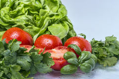 Tomato Salad. Fresh Tomatoes and Green salad Royalty Free Stock Photo