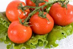 Tomato and salad leaves Stock Images