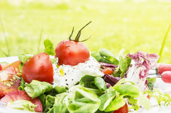 Tomato salad in sunny garden Royalty Free Stock Image
