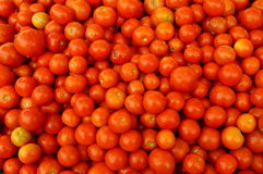 Tomato for sale Stock Photography