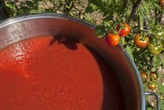 Tomato sauce with cherry tomatoes in the background. Large pot of homemade red tomato sauce and small cherry tomatoes ripening on plant Stock Photography