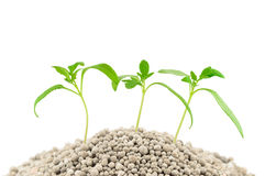 Tomato seedlings on the mineral fertilizers Royalty Free Stock Photography