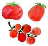 Tomato set Stock Image