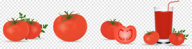 Tomato set. Detailed realistic red ripe fresh tomatoes with green leaves with water droplets isolated on transparent. Background. Vector 3d illustration, eps 10 vector illustration