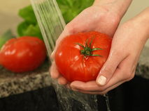 Tomato shower. Shower of tomato to protect it from bacteria Stock Photo