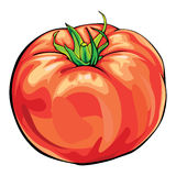 Tomato. Single colorful red tomato on white Royalty Free Stock Image