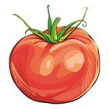 Tomato. Single colorful tomato on white Stock Photography