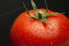 Tomato single with drops. On black royalty free stock photo