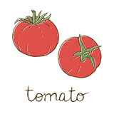 Tomato sketch Stock Image