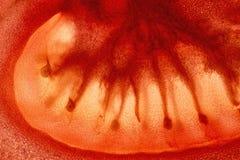 Tomato Slice Enlightened Close Up Background. Red Tomato Slice Enlightened Close Up Background Stock Photo