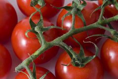 Tomato. Small tomatoes on a green branch Stock Photo