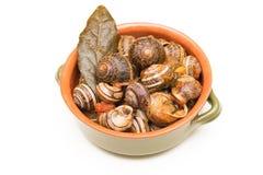 Tomato snails Stock Photography