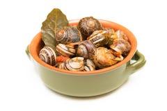 Tomato snails Royalty Free Stock Photography