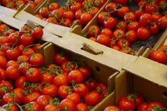 Tomato. Some fresh tomatos in supermarket Stock Photography
