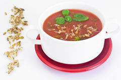 Tomato Soup with Germinated Grain in Plate. National Italian Cui Royalty Free Stock Photography