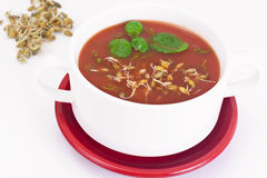 Tomato Soup with Germinated Grain in Plate. National Italian Cui Stock Image