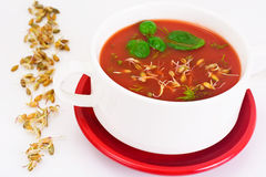 Tomato Soup with Germinated Grain in Plate. National Italian Cui Stock Photo